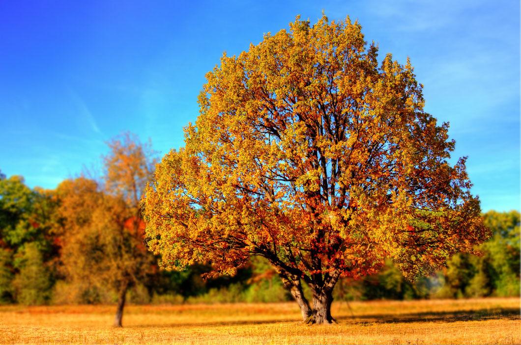 naturbilder höst (9)