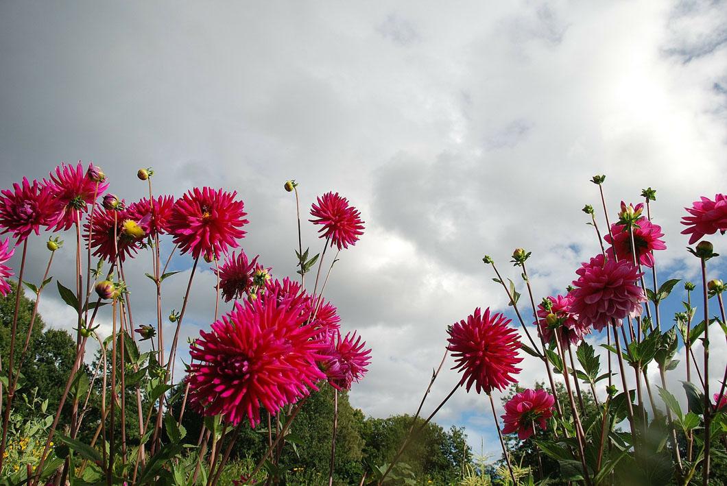 flower-256775_1920